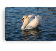 Pride and Grace - Swan Gliding on Satiny Ripples Canvas Print