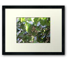 Banana Spider Framed Print