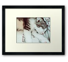 Baby Tabby Cat Sleeping In Kitty Basket Framed Print