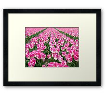 Dutch Tulips part 3 Framed Print