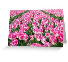 Dutch Tulips part 3 Greeting Card