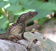 Tropical Lizard by edlineuser