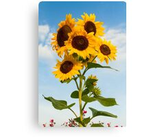 Sunflower Cluster Canvas Print
