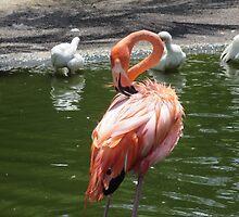 Flamingo by edlineuser