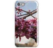 Tree Study 11 iPhone Case/Skin