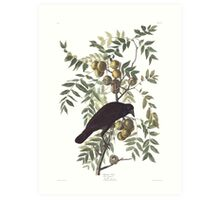 Crow - John James Audubon Art Print