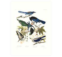 Magpies, Jays & nutcrackers - John James Audubon Art Print