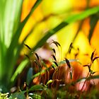 moss in color by Manon Boily