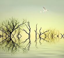 Calm by shalisa