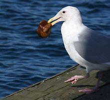 Seagull With its Catch by griffingphoto