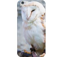 View of Barn owl sitting on falconer glove iPhone Case/Skin