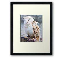 View of Barn owl sitting on falconer glove Framed Print