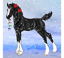 Black Draft Horse Foal in Snow Photographic Print