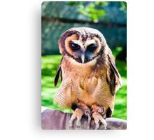 Close up portrait of brown wood Owl against green background Canvas Print