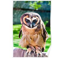 Close up portrait of brown wood Owl against green background Poster