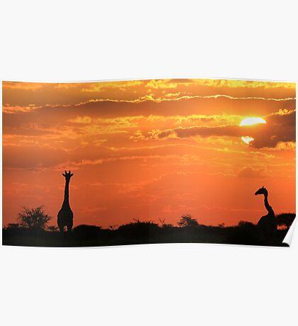 Giraffe - Love of Sunsets - African Wildlife Background Poster