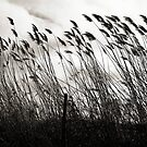 Bending in the Wind  by Ethna Gillespie