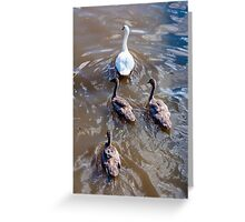 Beautiful swan familiy with nestlings in lake Greeting Card