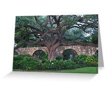 Alamo Cotton Tree - Alamo San Antonio Texas- PICTURE- CARD- PILLOW Greeting Card