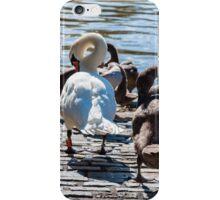 Beautiful swan familiy with nestlings in lake iPhone Case/Skin