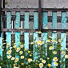 Fence and Flowers by Ethna Gillespie