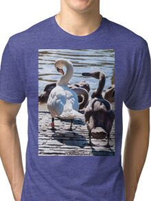 Beautiful swan familiy with nestlings in lake Tri-blend T-Shirt
