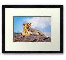Beautiful Lioness Framed Print