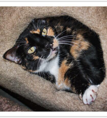 Taffy loves her kitty condo Sticker