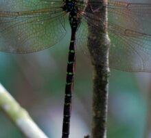 Forest dragonfly Sticker