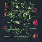 roses by Zak Milofsky