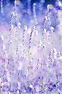 ~ pastel dreams II ~ by Adriana Glackin