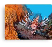 Red Lionfisch - Pazifischer Rotfeuerfisch Canvas Print
