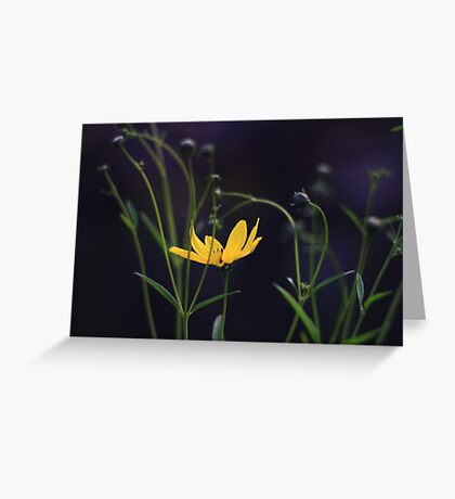 Tracery Flower  Greeting Card