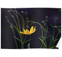 Tracery Flower  Poster
