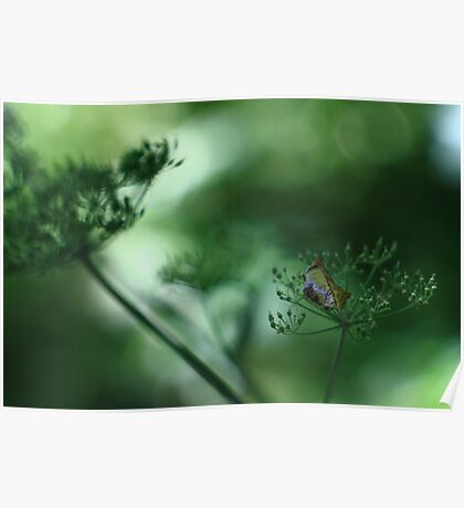 Leaf Fall On Cow Parsley. Jupiter 9 on EOS 7D Poster