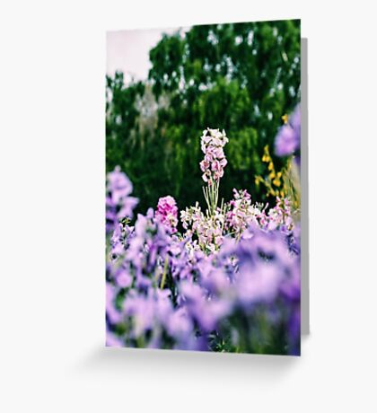 Pink and purple floral print  Greeting Card