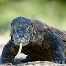 Komodo Dragon by Brad Francis