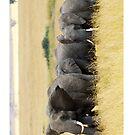 The Herd - Masai Mara by Brad Francis
