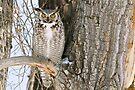 Owl surprise by Eivor Kuchta