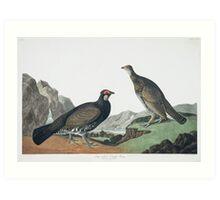 Dusky Grouse - John James Audubon Art Print