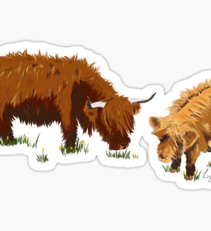 Highland Cow's Sticker