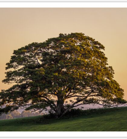 One Tree Hill Sticker