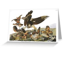 Northern Bobwhite - John James Audubon Greeting Card