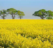 Rape Field. by Billlee