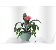 House plant On white background  Poster