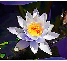 Abstract Waterlily flower Photographic Print