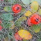 Berry Jewel Case by Kasia Nowak