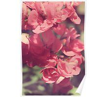 Pink Florals Poster
