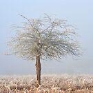 Hawthorn Tree by Kasia Nowak