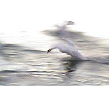 The Swan #2 Photographic Print